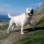 Alfi, North Berwick Law